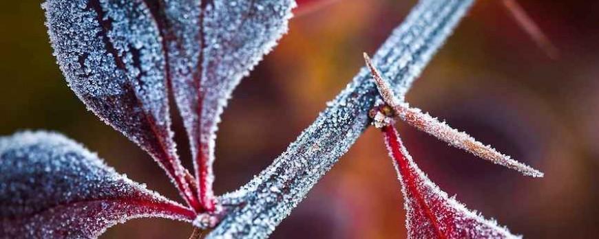 Зони морозостійкості рослин в Україні